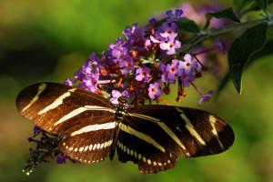 Maclay_Gardens_20131005_1388_ID-XL